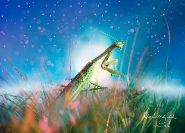 Čarobna galerija slika insekata umjetnice iz Malezije