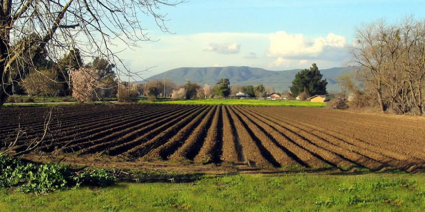 Zemljište i priprema zemljišta za uzgoj jagoda