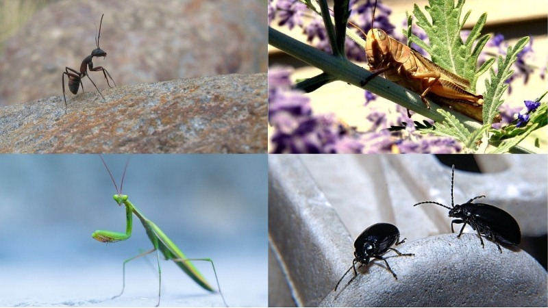 Priroda piše priče: ljubav, viteštvo i vjernost među insektima