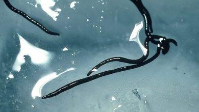 crvi u ledu