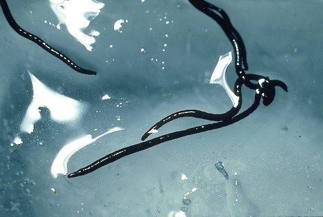 Crvi zamrznuti prije više od 42.000 godina ponovno oživjeli