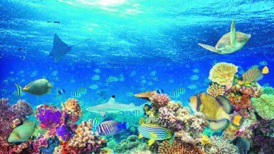 duboki okean zivotinje morske ribe