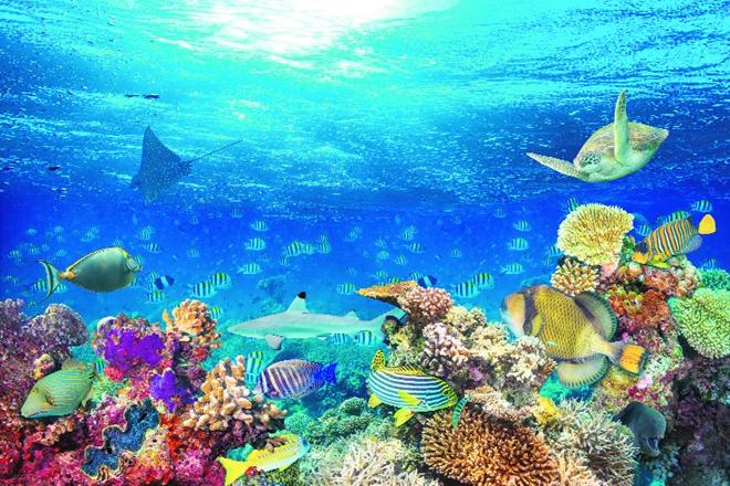 Jedna australijska studija kaže da netaknuti dijelovi okeana brzo nestaju!