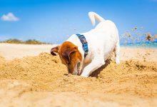 pas kopa pijesak zemlju kucni ljubimac plaza more