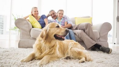 pas porodica ukucani familija kucni ljubimac