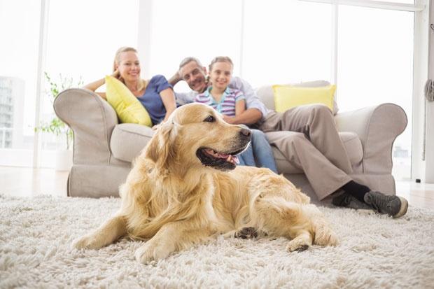 Znate li da nas psi stvarno vole?