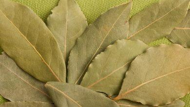 lovorov list zacinsko bilje