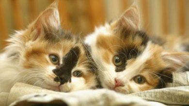 macke macici