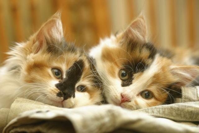 Da li vam smeta kada ste u blizini mačaka?