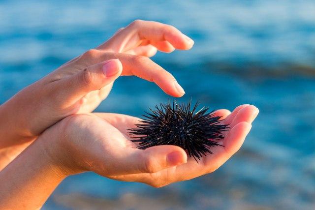 Nemojte dozvoliti da vam ova mala životinja pokvari vaš odmor na moru