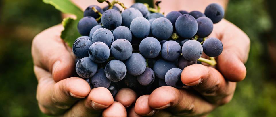 Grožđe: 6 razloga zašto ga obavezno jesti