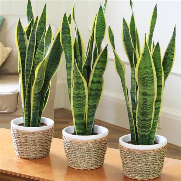 Znate li zašto je dobro imati barem jednu biljčicu u vlastitom domu?