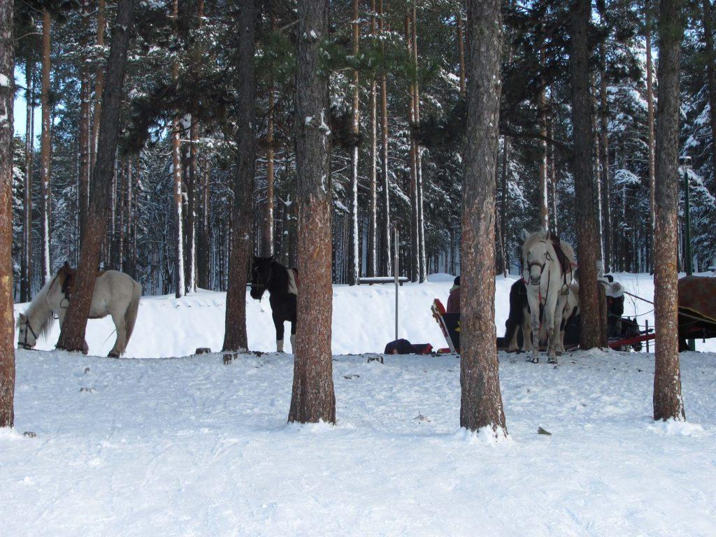 Zlatiborska idila i prvi sneg ove sezone